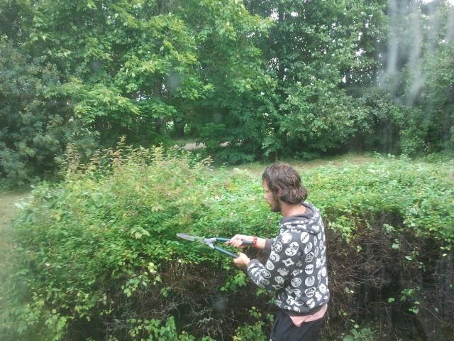 Freek cutting hedge