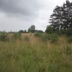 fields 6