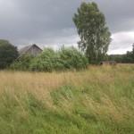 fields 3
