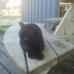 Fritz on Island
