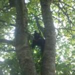 tree monster 3
