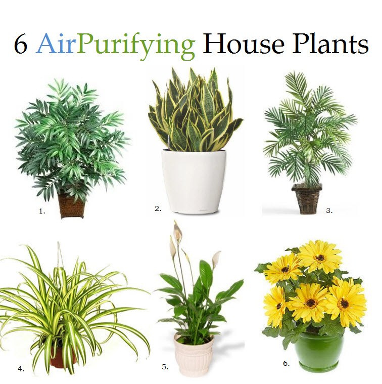 Air Purifying House Plants » IzReaL