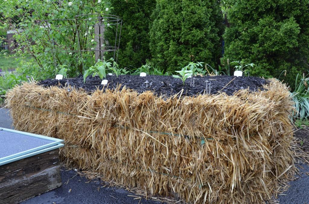Straw Bale Gardening IzReaL