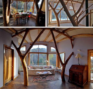 organic-modern-tree-house