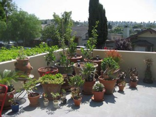 Container garden 4