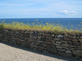 Cornish Hedge 1