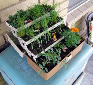 Fishing box herb garden