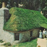 Goat House Green Roof