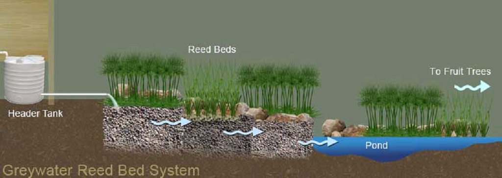 Greywater-Reedbed