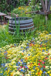 Rainbarrel Water Collection in Garden