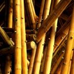 bamboo9